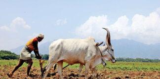 ದೇವರ ವಿಗ್ರಹಕ್ಕೆ ಹಾನಿ: ರೈತರಿಗೆ 21 ಸಾವಿರ ದಂಡ, ಸಾಮಾಜಿಕ ಬಹಿಷ್ಕಾರದ ಬೆದರಿಕೆ